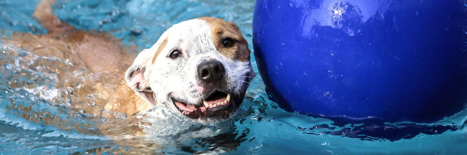 Nearest doggy daycare Atascocita Texas