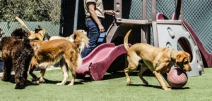 find nearest doggy daycare in Cypress TX
