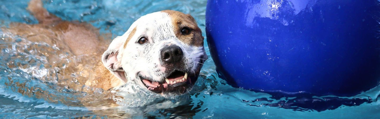 Cypress TX Boarding Places for Dogs Near Me